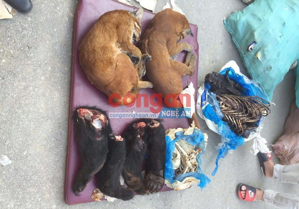 02 con beo, 02 kg xương động vật khô và 04 tay gấu tươi