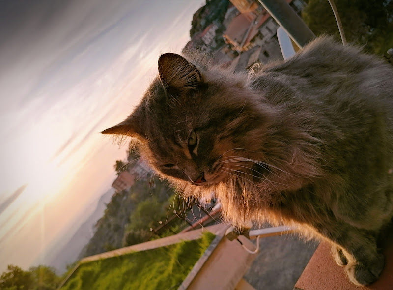 Il mio gatto al tramonto  di alessandra_fina