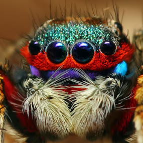 Mr.Rainbow by Karthi Keyan - Animals Insects & Spiders