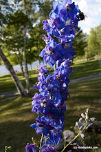 Photo: Flowers at Boulder Beach State Park by Ellie Stover