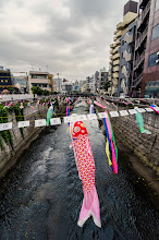 Photo: Carp shaped streamers called koinobori sail in the wind in preparation for kid's day in Japan