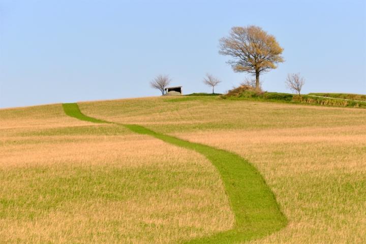 Sentiero nel grano di ciubecca