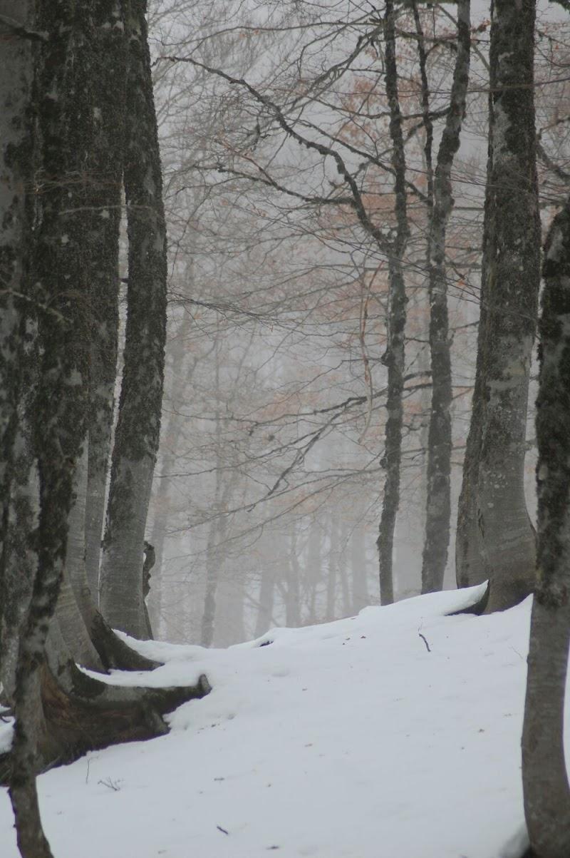 Su le soglie del bosco di SimonaCaroselli