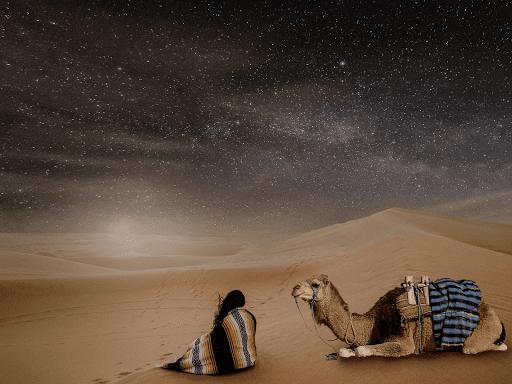 Stage de connexion avec les dromadaires dans le désert Chantal Vereyen