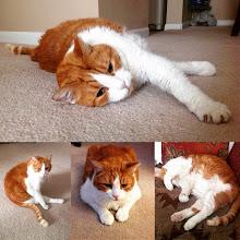 Photo: Mr. Tom's spending the day portraits #intercer #cat #cats #catsofinstagram #pet #pets #petsofinstagram #funny #furry #sleep #orange #white #play #cute #sweet #paws #portrait - via Instagram, http://ift.tt/1EdQDk3