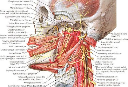 Anatomy Atlas APK screenshot thumbnail 3