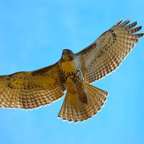 by Stephen Schutt - Animals Birds