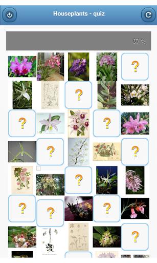 Houseplants - quiz