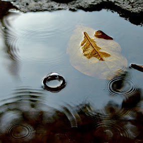 After Rain by Rafael Jatiaji - Nature Up Close Leaves & Grasses ( water, fall leaves on ground, reflection, ground, leaf, rain )