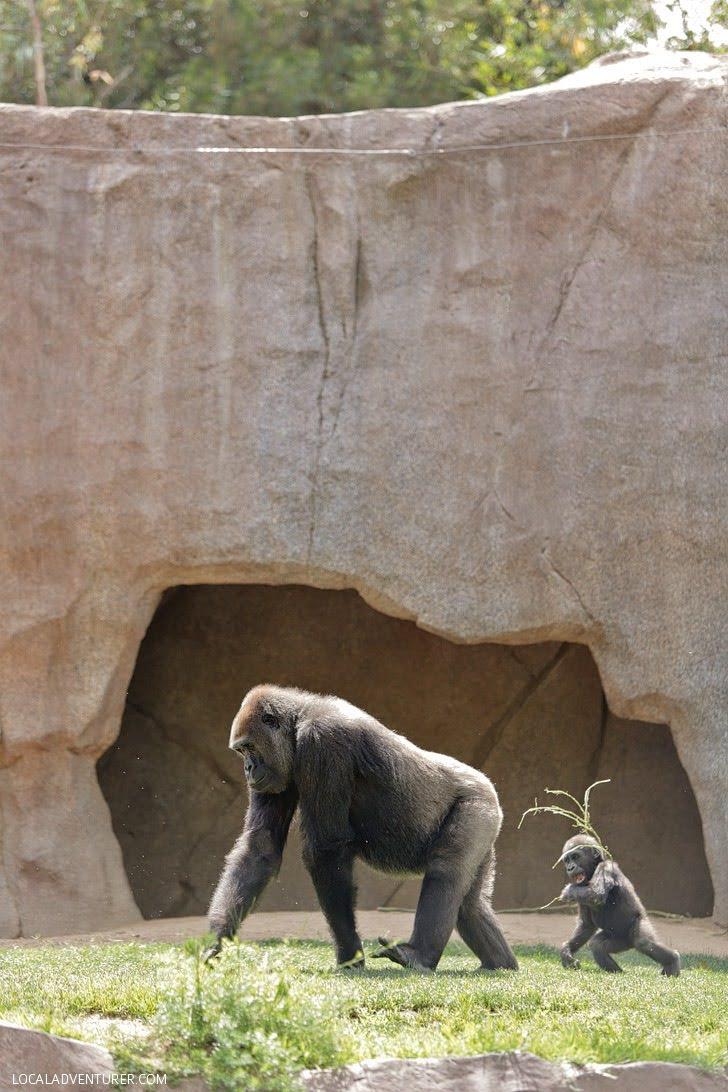 San Diego Wild Animal Park.