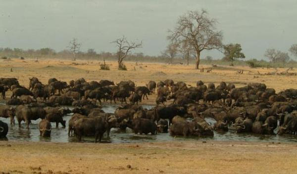 hwange-national-park