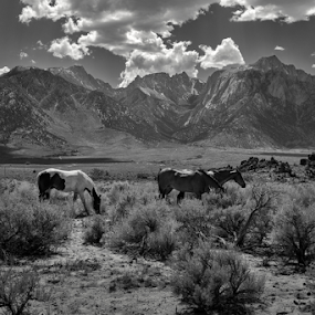 True West by Michael Keel - Black & White Landscapes ( mt williamson, mt. whitney, black and white, eastern sierra, owens valley, mt langley )