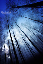 Photo: Blue Forest