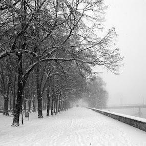 Skopje -  Snowy weather  by Emil Chuchkov - Landscapes Weather