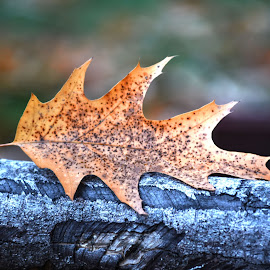 Just a Leaf by Aura Vasile - Nature Up Close Leaves & Grasses