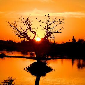 before the sunset by Shambaditya Das - Landscapes Sunsets & Sunrises ( nature, serene, sunset, beauty, tree of life )