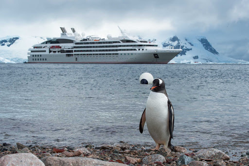 Ponant-Antarctica-penguin.jpg - Cruise Ponant to Antarctica. Formal night optional.