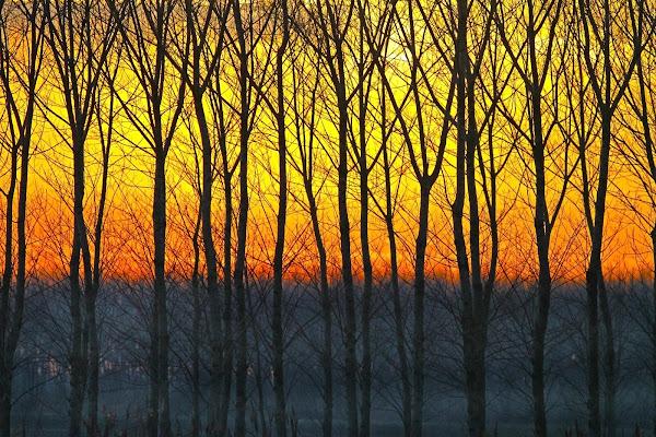 Bosco al tramonto di Fotodiale