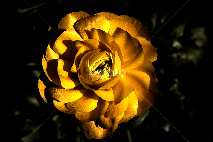 Yellow Flower by Michael Miller - Nature Up Close Flowers - 2011-2013