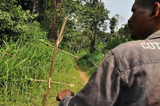 Photo: jungle traffic marking