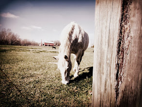 Photo: Old-fashioned photo of a horse grazing at Carriage Hill Metropark in Dayton, Ohio.