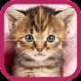 Kitten Puzzle HD