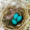 7-18-18 Catbird nest.jpg