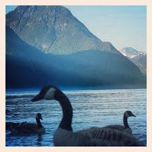 Photo: A few geese on the Pitt Lake (Maple Ridge/Pitt Meadows) #intercer #lake #bird #birds #goose #geese #park #water #blue #mountain #nature #instanature #scene #reflections #outdoor #outdoors #beautiful #pretty #shadow #canada #britishcolumbia #sunset #scenery #view #mapleridge - via Instagram, http://instagr.am/p/RA2ZbapfgG/