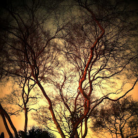 Passion Catalyst by Rachel Santellano - Instagram & Mobile Android ( hdri, tree, nature, hdr, landscape )