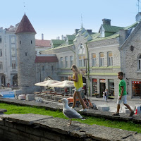 Centro storico,Tallinn. di