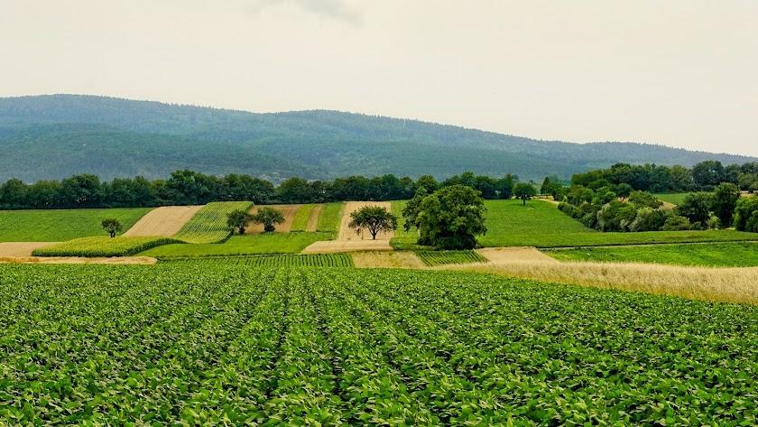 imagen de un cultivo.