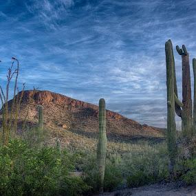 Saguaro National Park by Charlie Alolkoy - Landscapes Deserts ( desert, sunrise )