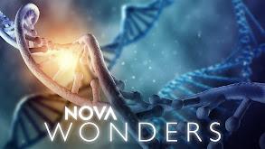 NOVA Wonders thumbnail