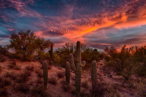 Tucson Tonight by Charlie Alolkoy - Landscapes Deserts ( desert, sunset, arizona, tucson, saguaro, cactus,  )