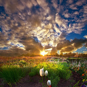 On Earth as it is In Heaven by Phil Koch - Landscapes Prairies, Meadows & Fields ( vertical, yellow, leaves, sky, fi  eld, nature, tree, weather, perspective, flowers, light, wild, orange, twilight, art, agriculture, white, horizon, wis  consin, portrait, serene, trees, lines, wisconsin, ray, tulips, landscape, phil koch, spring, sun, photography, life, horizons, clouds, office, purple, park, heaven, scenic, morning, shadows, red, blue, sunset, amber, meadow, summer, beam, sunrise, garden )