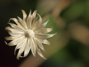 Photo: After Flower
