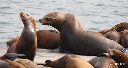 Photo: (Year 3) Day 20 - Seals Sunbathing #2