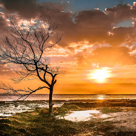Touch of Orange  by Barbara Horner - Landscapes Sunsets & Sunrises ( orange, sunrise, color, tree, clouds, water, sun,  )