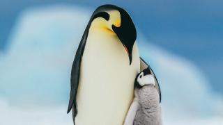 imagen de dos pingüinos