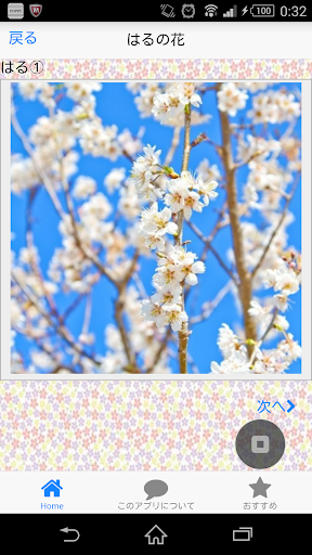 玩攝影App|花!写真四季の癒し~美しい日本の花雅で心をリフレッシュ~免費|APP試玩