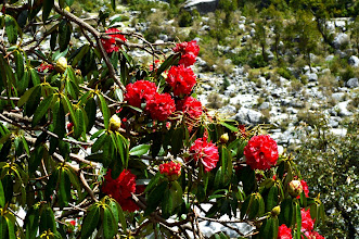Photo: Rhododendrons gallore in spring time
