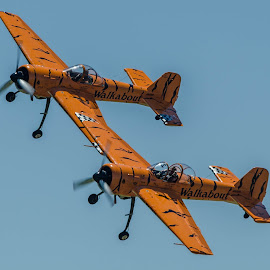 Twin TIgers by Ron Malec - Transportation Airplanes