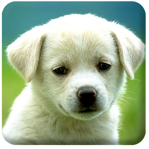 Free HD Puppies Wallpaper - Android Apps on Google Play