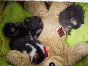Photo: Mia's Kittens 7