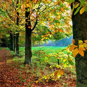 Beautiful time of the year... :-)  by Ana Wisniewska - City,  Street & Park  City Parks