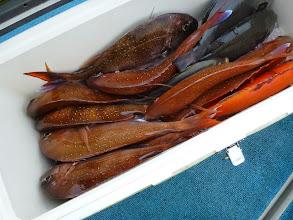Photo: タムラさんの釣果。 悪いながらも真鯛10匹キャッチ。