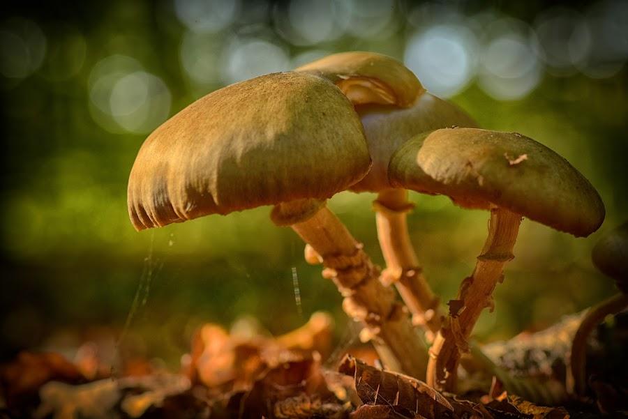 Four Friends by Marco Bertamé - Nature Up Close Mushrooms & Fungi ( fall, fungi, sunshine, four, bokeh, dof, wood, autumn, shroom, mushroom, sdof )