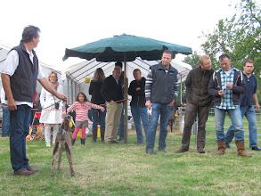 Photo: Rubriek 14: nubische lam geboren op 15-4-2012. 1a. Florentien van stal Suijden van P. Suijdendorp.