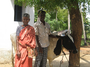 Photo: Mrs Kakkaponnu purchased a milky  cow from our rehabilitation loan . They are standing in front of her residence at Sammbakulam village, Madurai Distict, India.