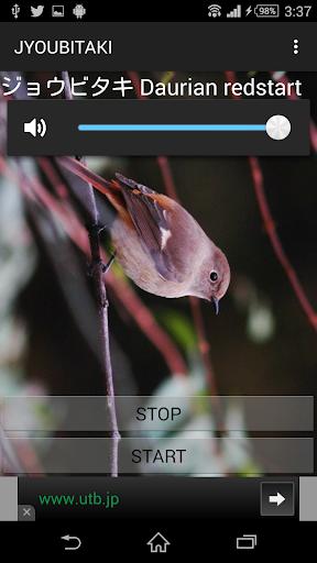鳥鳴き声ジョウビタキ